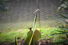 Spider-kid (Petrisiela) Tags: spider webs net web spiderman earth biodiversity alive nikon garden