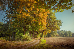 A touch of gold (matthiasstiefel) Tags: herbst autumn gold weg pfad