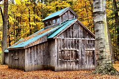 Cabin in the woods available for purchase on Shutterstock (CCphotoworks) Tags: autumninontariocanada ccphotoworks yorkregionontario sheppardsbushaurora moldiv shutterstock fallcolours leaves trees forest cabininthewoods building structure fallcolourscabin landscape scenics nature autumn