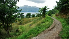 West Highland Way 2 (brightondj - getting the most from a cheap compact) Tags: fourthwalk westhighlandway lochlomond scotland trossachs tree path walk