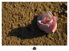 DSC_4396 copie (C&C52) Tags: extrieur cimetire terre sol tombe dtail fleur