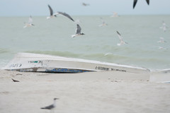 Celestn (Tony Pulokas) Tags: celestn bird ave yucatn mexico tilt blur bokeh boat lancha ocean gulfofmexico gull gaviota surf sand