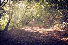 (maxlaurenzi) Tags: volta mantovana italy garda lake vintage colors autumn morning walking romance silence sun light nature woods trees ray