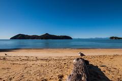 IMG_3351 (Schlueter1992) Tags: neuseeland2016urlaub abeltasmannationalpark tasman neuseeland