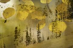 Whisper in the wind (Karen McQuilkin) Tags: whisperinthewind aspens pines karenmcquilkin utah west powder mountain skiresort