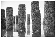 When the tide comes in _ 2 (leo.roos) Tags: breakwater mole groyne groin golfbreker palen posts vlissingen flushing noordzee northsea westerschelde sepia oktoberfest2016 challenge dyxum fedmikron  helios893019 russianlens sovietglass fixedlens darosa leoroos vastelens adaptedtoemount a7s paalhoofd badstrand