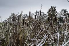 Erster Frost - 0021_Web (berni.radke) Tags: ersterfrost frost raureif wassertropfen rime eisblumen eiskristalle iceflowers icecrystals escarcha