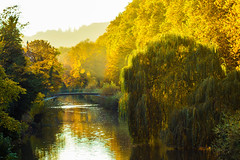 weeping willow (LiterallyPhotography) Tags: tbingen trauerweide herbst golden oktober