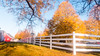 Sun Glistens on Fence Line Corner (Buckley Fence, LLC) Tags: yellow leaves yellowleaves whitefencefarm chicagoland pettingzoo illinois fall steelfence wiremesh blackmesh buckleyfence steelboard whitefence goldenhour sunset