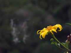 Nueva flor (dan95_Zambrano) Tags: flor armonia naturaleza biologia belleza petalos aire libre