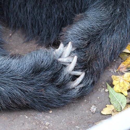 Attentively listening bear. ••• #bear #brownbear #animalphotography #animalgram #bohemianstyle #bohemia #czechrepublic #ig_czech #fall🍁 #fallwalks #sunnyafternoon #točník #still #destinationsunknown  #travelphotography #travelgram #travel #noma