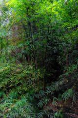 DSCF7207 (kingston Tam) Tags: waterfall river rapids sedimentaryrock stone ancientcity guizhou wetlandpark park canyon landscape naturallandscape mountain scenery streetscape oldfashioned streetphotography castle hawkers peddler fujifilmxt1