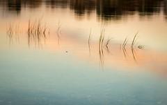 Nissequogue River State Park, NY (willsdad48) Tags: nissequogue newyorkstateparks sunset fujifilmxt2 fallfoliage fallcolors landscape longisland travel travelphotography 35mm