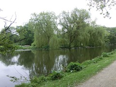 Trauerweide i Odense (philosaphira) Tags: trauerweide odense baum tree dänemark denmark danmark spiegelung reflection reflektion