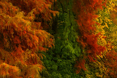 Autumn (Enricodot ) Tags: color colors colori orange yellow green tree trees autunno autumn landscape leaves leaf red ilobsterit enricodot