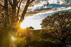 Soleil couchant Dordogne (L'Oeil De Palo) Tags: coucher soleil arbre nature feuillage ciel dordogne paysage landscape lumiere campagne