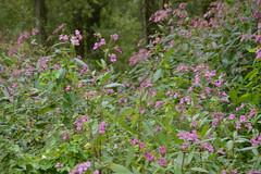 DSC_1036 (jeannettejacobs) Tags: biesbosch natuur bos