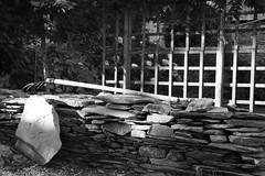 Coup de projecteur solaire (.urbanman.) Tags: mur muret pierre ardoise pierresche fourche jardin bretagne glycine