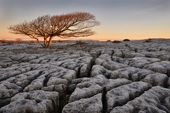Frosty mornings (PentlandPirate of the North) Tags: farleton newbiggin limestone pavement sunrise dawn tree rock frost