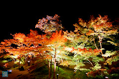 Tohoku 2016 - 507 (西文 Simon) Tags: 日本東北 miyagigun miyagiken 日本