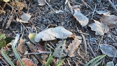 Winter is coming (igelchen) Tags: eis licht blätter light leafs grass gras winter ice soil erde kristalle zweige sticks