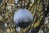 Wandeling Gele Route Oisterwijk 04-12-2016 (marcelwijers) Tags: wandeling gele route oisterwijk 04122016 noord brabant nederland niederlande netherlands bos paybas wanderung wald wood winter winterse landschap natuurmonumenten wandeltocht wandelen boswandeling vennenroute vennen boshuis venkraai kerstbal kerstversiering
