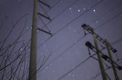 DSC_2868 (katie_sokoloff) Tags: westpalm florida powerlines blur starrynight purple blue night nightphotography stars bokeh bokehstars nikon