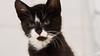 Schmutzli with an attitude RBB_7795 (R. Burri Photography) Tags: portrait animal cat 50mm blackwhite nikon kitten outdoor kitty indoor 2015 animalpictures hauskatze schmutzli d7100 katzecat rburriphotography richardburri