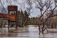 Still Rising (lseankey) Tags: trees water landscape spring events northdakota redriver fargo lindenwoodpark sertomabridge nikond5000 nikon28300mm flood2013 nd2015contest