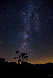Milky Way at Joshua National Park
