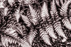 Ferns (robtm2010) Tags: flowers ohio usa flower canon garden ferns dayton t3i smithgardens smithmemorialgardens