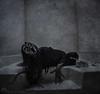 Dark Waters - Worst Fears III (adrienne.beacco) Tags: halloween water dark studio scary surrealism makeup haunted spooky gore horror demon conceptual sfx alienbees nostrobistinfo beacco removedfromstrobistpool seerule2 dracast