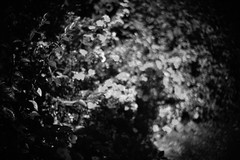 *** (bendikjohan) Tags: flowers shadow bw white black film nature oslo norway night forest blw woods parks 1600 neopan bnw bl