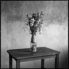 Verwelkter Strauß Blumen (Konrad Winkler) Tags: 6x6 stillleben blumen tisch langzeitbelichtung ilfordpanfplus mittelformat blumenstraus hasselblad503cx blaufilter epsonv800