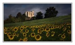Chteau en ruines sur le chemin de Compostelle (Ruins of a castle) (Claude Robillard) Tags: castle ruin ruine compostela sunflower chteau tournesol compostelle gr65 viapodiensis