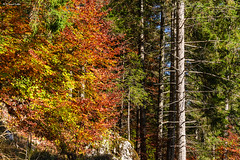 Autunno salendo al rif. Scarpa (-samuel-) Tags: fall montagne autunno dolomiti bosco agordo frassen agner rifugioscarpa malgaagner