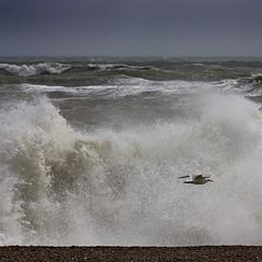 220 Brighton, East Sussex, June 2012 (Adrian Talbot) Tags: ocean surf moody shingle shoreline dramatic windy foam pebblebeach rough mothernature englishchannel hightide breakingwave herringgull crashingwave stormysea talbotgallery talbotgallerycouk