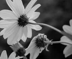 PA050504.jpg (Gianni Nicosia) Tags: fiori oviglio altreparolechiave