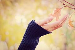 Umut... (Beyza G.) Tags: autumn fall leaf autumncolors sonbahar güz