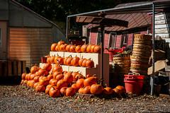 samsebeskazal.livejournal.com-8774.jpg (samsebeskazal) Tags: autumn upstate newyorkstate catskill catskillmountains