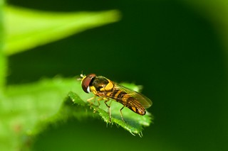 2015 Hover Fly 7