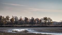 Etang de Birieux (Stéphane Sélo Photographies) Tags: eau oiseaux etang ain dombes birieux