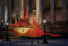 Poppies at Liverpool (juliereynoldsphotography) Tags: sunset liverpool landscape poppies stgeorgeshall juliereynolds juliereynoldsphotography