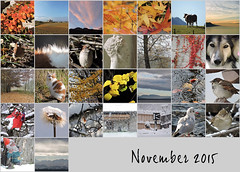 November 2015 mosaic (keepps) Tags: november mosaic bighugelabs monthmosaic