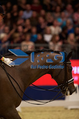 HB110534 (RPG PHOTOGRAPHY) Tags: world london cup olympia dressage 2015 tiamo jorinde verwimp