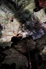 Autumn (Lide Etxeberria) Tags: mountain montaña adarra autumn otoño
