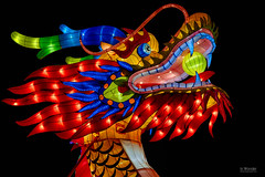China Lights VII, Dragon Detail (In Wonder Photo) Tags: lanterns chinese silk led boernerbotanicalgarden milwaukee wisconsin multicolored black background night outdoors nikon d750 hdr markadsit