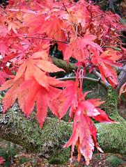 In Search of Colour (wheehamx) Tags: autumn pucks glen digital fuji f30