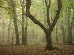 Catslip Wood (Damian_Ward) Tags: damianward photography ©damianward oxfordshire oxon catslip wood woodland mist