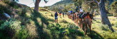 Camel Trekking (Daryl Kelly) Tags: cameltrekking family holiday outback bucketlist hawker flindersrangers southaustralia landscape nikond800e nikkor2427mmf28 darylkelly